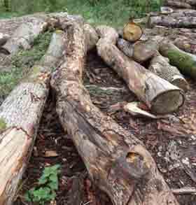 Rickyard logs